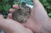 恋するウサギ